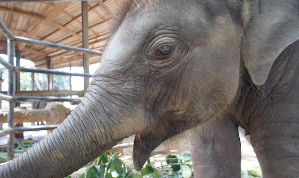 micro-elephant